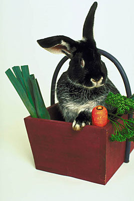 Feeding a rabbit isn't as simple as you might think