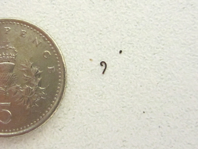 Flea droppings like this can indicate a problem